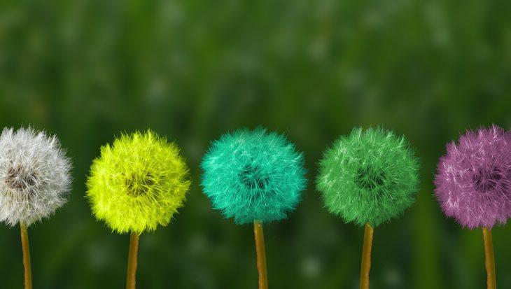 Theory of Change Dandelions